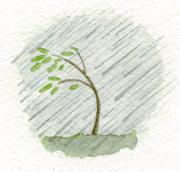 tree04a