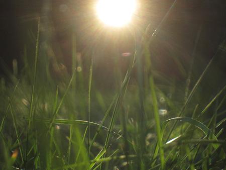 Grassy sun