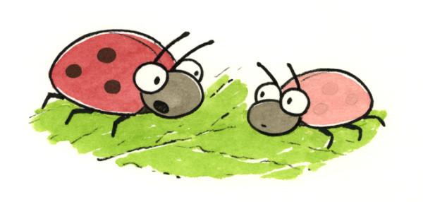 Two ladybugs talking